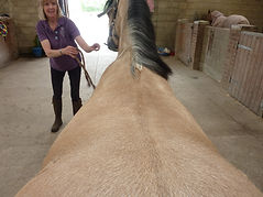 AH Saddles wither picture example for saddle fitting