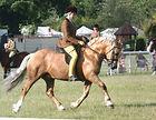 AH Saddle AH Symphony Show pony saddle