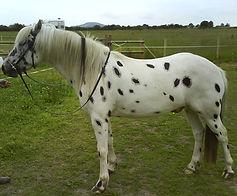 AH Saddles side profile for saddle fitting example 3