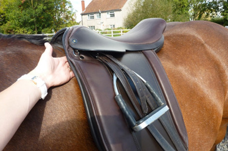checking the clearance on the frot panel of a saddle against th scapular/shoulder blade
