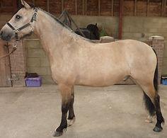 AH Saddles side profile example for saddle fitting