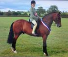 AH Saddles Sienna GP pony saddle