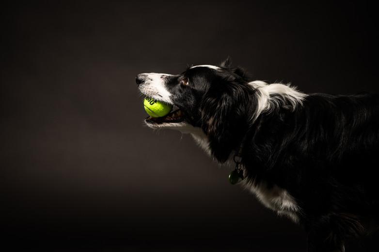 dogsession1-237.jpg