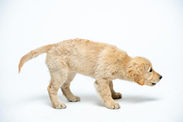 dogsession9-8-20-9.jpg