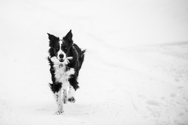 dogsession1-106.jpg