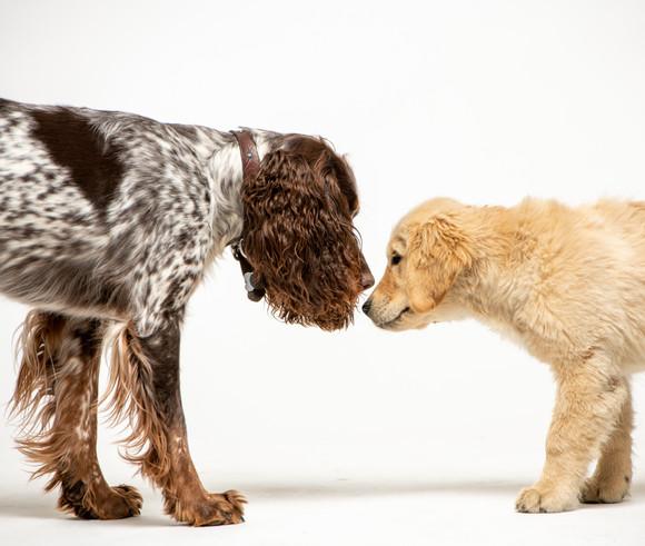 dogsession9-8-20-8.jpg