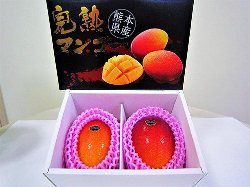 熊本県産 完熟アップルマンゴー2個入り(税込み)