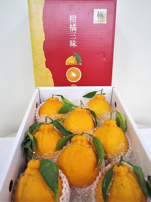 熊本県産不知火蜜柑8玉入り