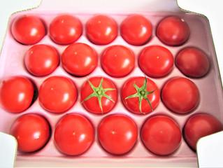 お薦め秀品 熊本県産塩味トマト『綾』