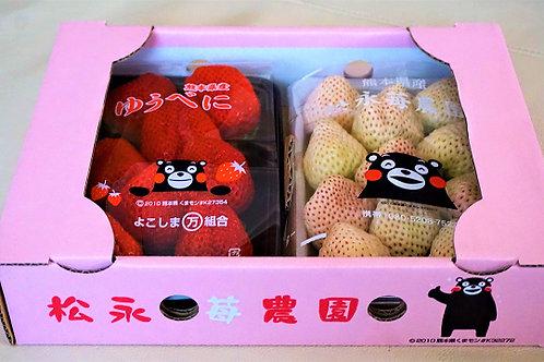 熊本県産紅白いちご(ゆうべに&白苺)