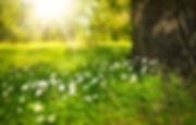 spring-276014__340.jpg