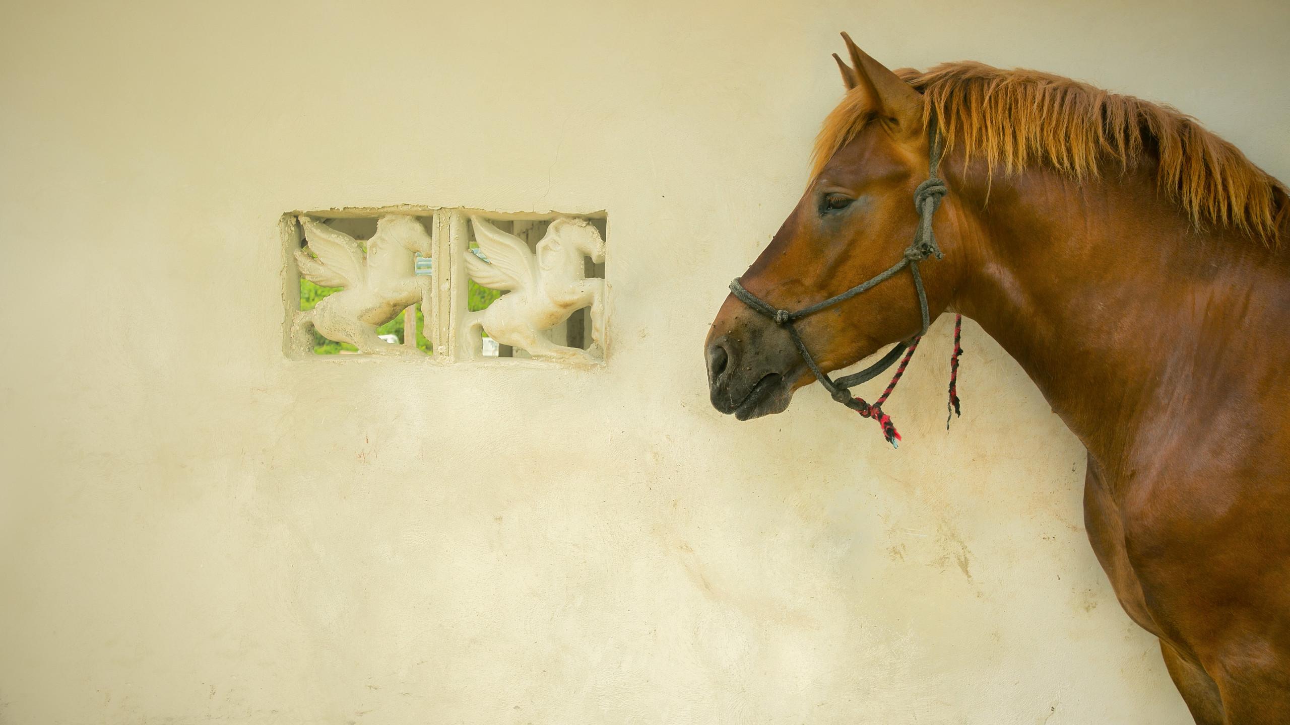 Cozumel Horse