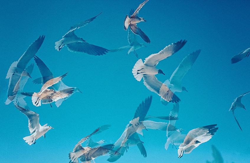 Birds at Buccanos