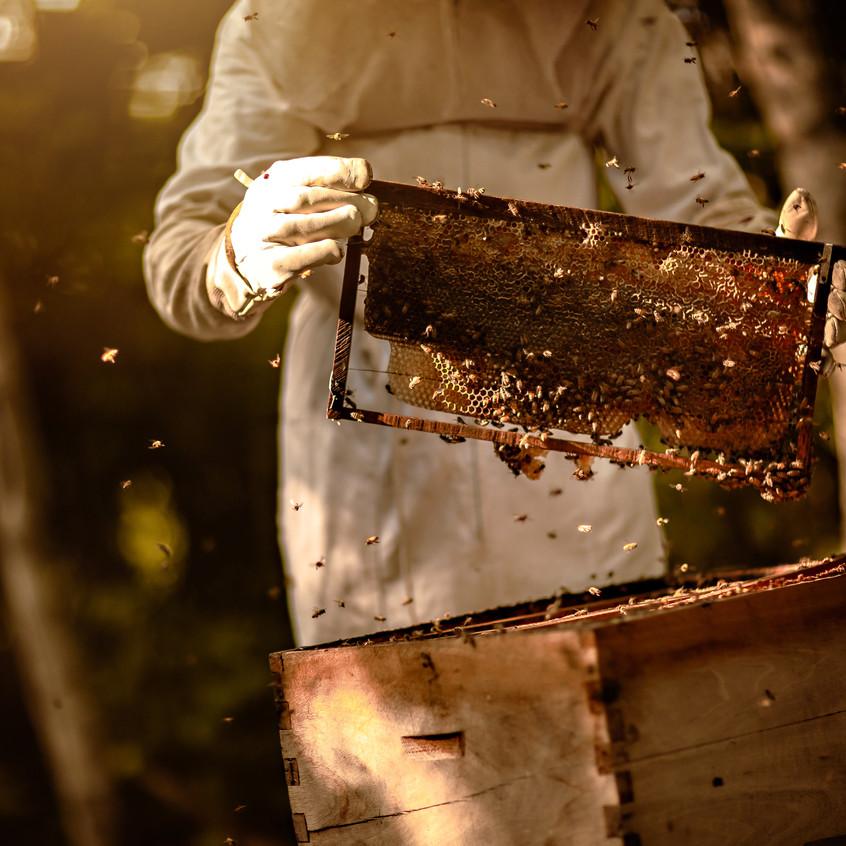 Bee Friendly Cozumel