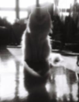 Mr.Cat profile