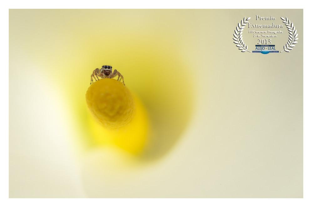 PREMIO EXTREMADURA Concurso Fotografía Naturaleza CM ALEJO LEAL 2015