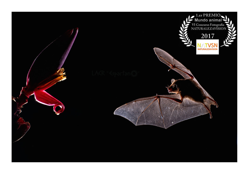 1º PREMIO Mundo Animal VI Concurso Fotografía Naturalezavision