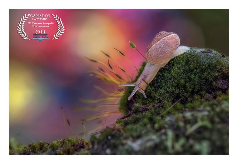 GANADOR ABSOLUTO - Concurso Fotografía Naturaleza CM Alejo Leal 2014