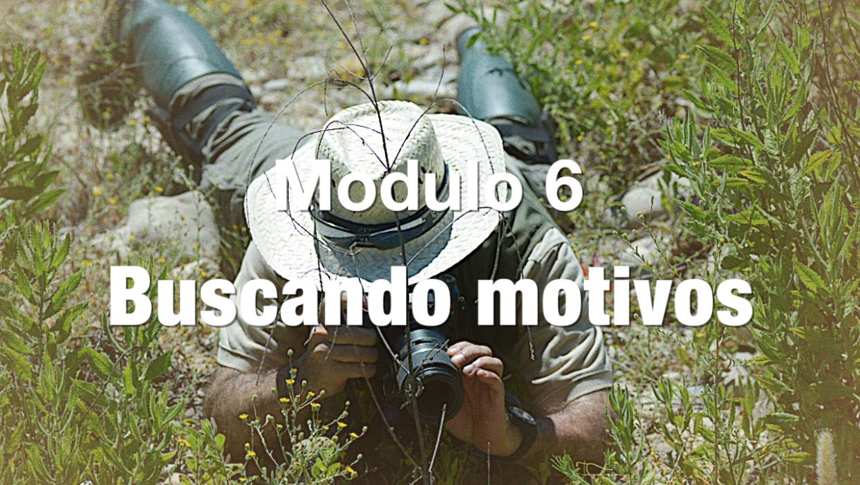 BUSCANDO MOTIVOS BLANCO