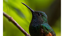 "Costa Rica 1ª etapa-Monteverde (Segunda parte). Tormenta Tropical ""Nate"""