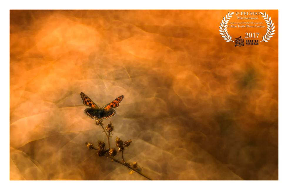 "2º PREMIO ""Microcosmos""- Golden Turtle Photo Contest 2017"