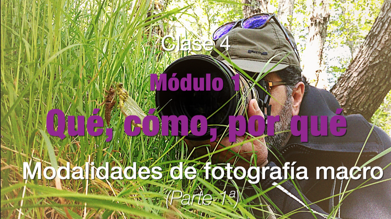 Clase 4 Modalidades fotografia macro 1
