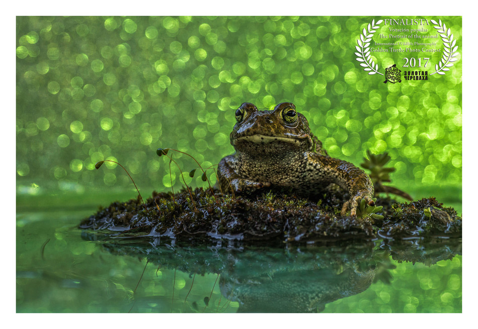 "FINALISTA Votación Popular ""The Portrait the Animal""- Golden Turtle Photo Contest 2017"