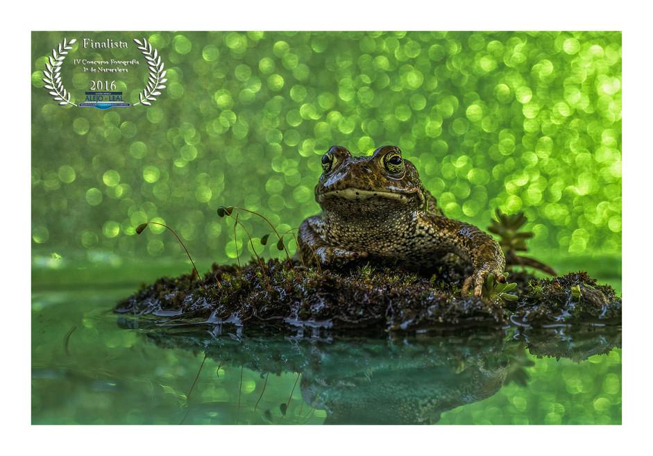 FINALISTA Concurso Fotografía Naturaleza CM ALEJO LEAL 2016