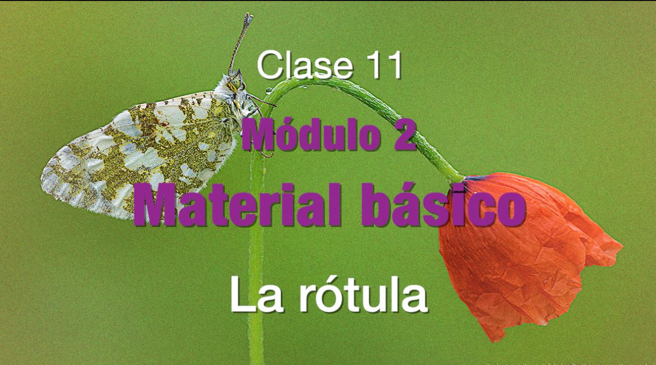 Clase_11_La_rótula