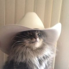 Crazy Cat Cowboy