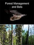 forest-management-and-bats.jpg
