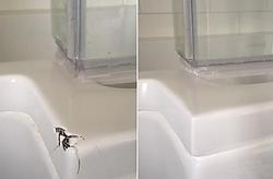 bath damage repair.png