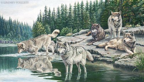 """""""Investigation"""" - Wolves"""