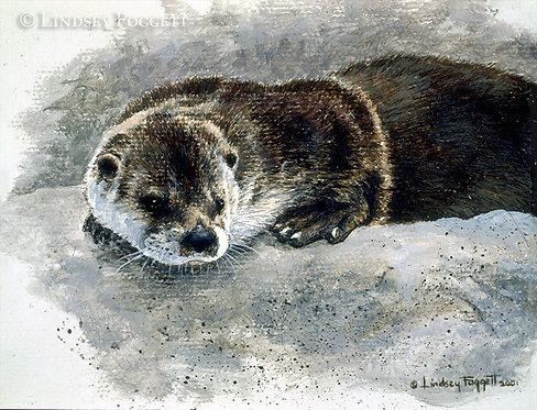 'Otter Study' - River Otter (Miniature)