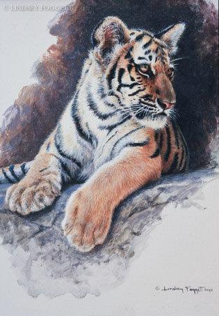 """""""Waiting"""" - Tiger Cub"""