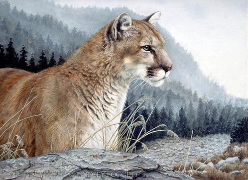 """""""Elusive Viewer"""" - Cougar"""