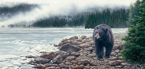 """""""In Search of Spring"""" - Black Bear"""