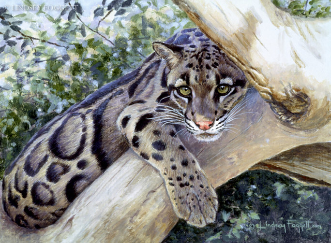 """Boreal Beauty"" - Clouded Leopard"
