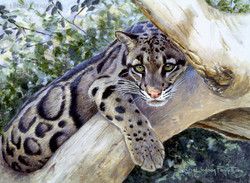 """""""Boreal Beauty"""" - Clouded Leopard"""