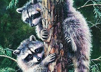 Racoons, Small Mammals, Moose, Birds
