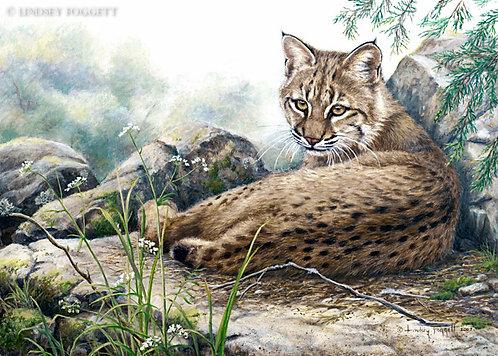 """Early Days"" - Bobcat"