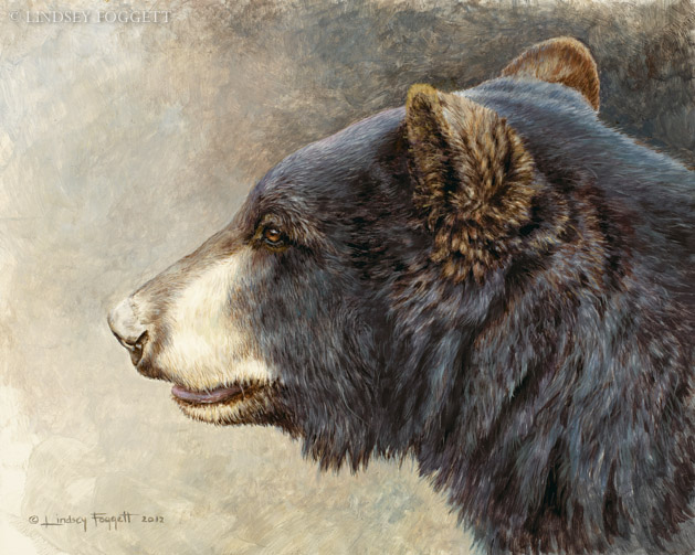 """Black Bear Head Study"""