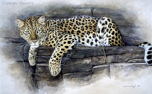 """""""Focused"""" - Amur Leopard"""