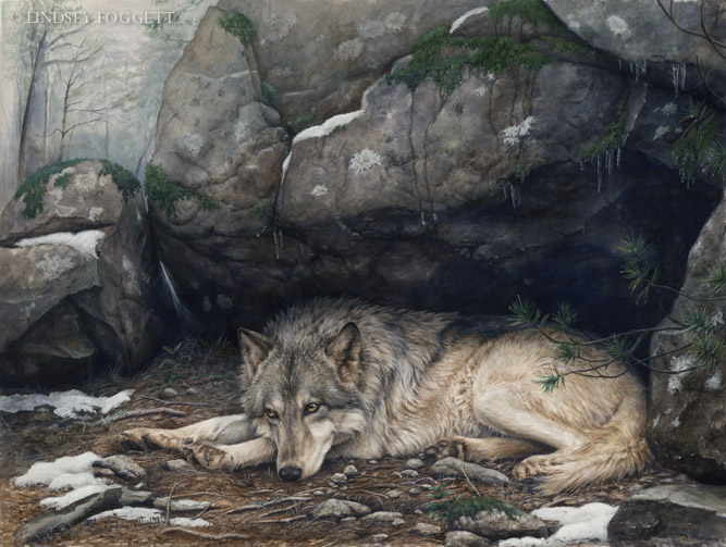 """""""Patience"""" - Wolf"""