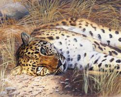 """""""Golden Light"""" - Amur Leopard"""