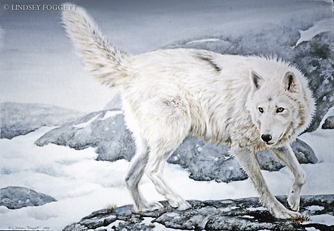 """""""The Chase"""" - wolf"""