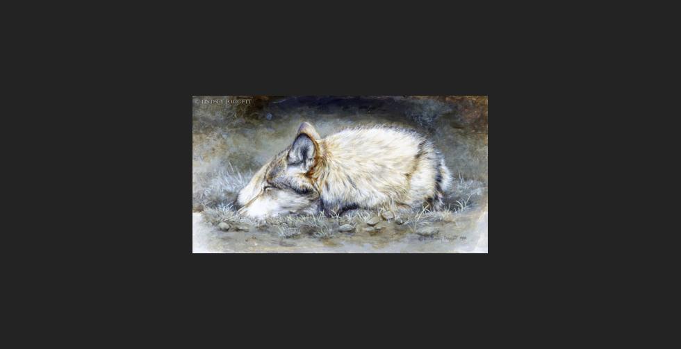 """Resting"" - Wolf"