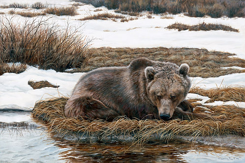 """""""Anticipation"""" - Grizzly Bear"""