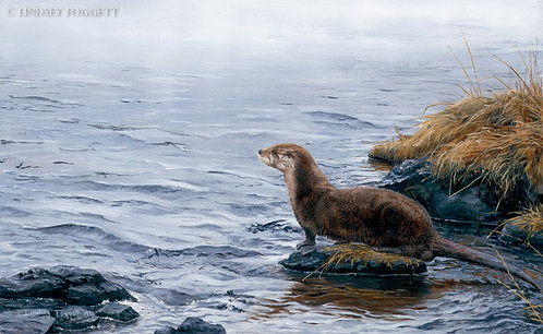 """River Watching"" - River Otter"