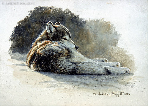 """""""At Ease"""" - wolf (Miniature Painting)"""